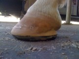 eponashoe front foot
