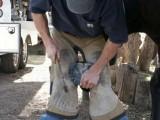 Loren Warner, Santa Clarita, CA Farrier - nailing horseshoe